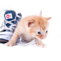 Pjuck är ett roligt ord som betyder doja eller sko